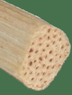 Peddigrohr im Querschnitt am Beispiel Splintpeddig